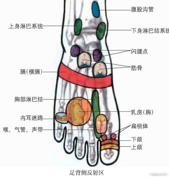 三、全足按摩程序手法 如果全足彻底按摩需30分钟左右,但不需要每天做全足脚底按摩,这反而会损伤肌肉。全足按摩每周做两次应该就可以了。 还要根据受按摩者体质决定按摩时间,体质弱者不宜时间过长。 按摩足底程序部分: 1、自上向下移动按摩基本反射区,(在肾反射区位置多停几秒钟再往下移动)从肾输尿管膀胱共3~4分钟。 2、同时点压按摩足大拇趾(包括大脑、垂体、视觉中枢敏感点、额窦)1分钟后,接着横向来回移动按摩5趾头(额窦)1分钟,共计2分钟。 3、同时横向来回按摩足趾和足底交界处(包括血压调